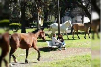 Insólita irrupción de tres caballos sueltos en pleno microcentro de Paraná