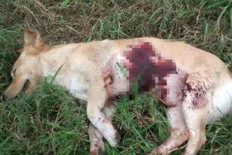 La foto del asesinato de un perro en Entre Ríos generó revuelo en Colombia
