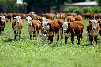 Según informe, Entre Ríos está entre las cinco provincias con mayor stock bovino