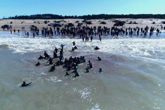 Impresionante rescate de orcas en Mar Chiquita