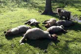 Doce ovinos muertos y varios heridos por el ataque de una jauría de perros