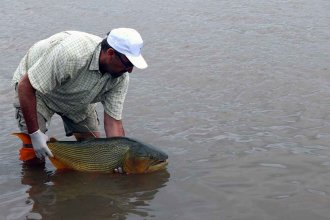 Confirman que hay rastros de fármacos en peces del río Uruguay