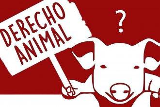 Cómo abordar la cuestión de los animales como problema