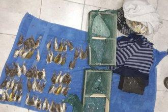 Pasajero transportaba 97 pájaros silvestres ocultos en un bolso: la mayoría estaban muertos