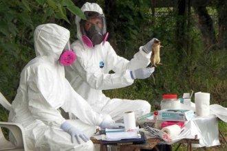 Muerte por hantavirus en Islas del Ibicuy: estudiarán la presencia del roedor que lo transmite