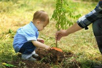 Invitarán a plantar un árbol por cada nuevo bebé