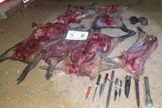 Sorprendieron a dos cazadores furtivos que habían matado a cinco carpinchos