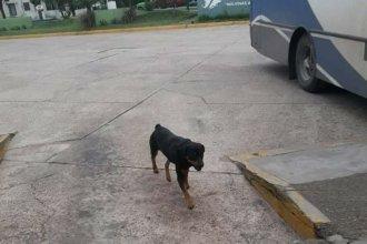 Un perro viajó en colectivo de Paraná a Colón, pero sin los dueños