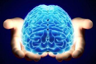 El cerebro... ese desconocido