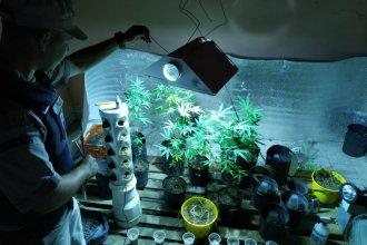 Allanaron y desmantelaron dos habitaciones destinadas al autocultivo de marihuana