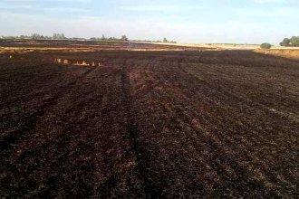 Voraz incendio acabó con más de 30 hectáreas destinadas a la cosecha de trigo