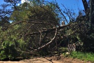 Tragedia en el Departamento Concordia: un hombre cortó un árbol, se le cayó encima y murió