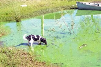 """Preocupación por las cianobacterias, """"el peligro verde que nos espera en el agua"""""""