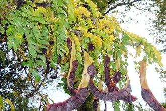Millonario proyecto para controlar especie exótica contemplará las dos orillas del río Uruguay