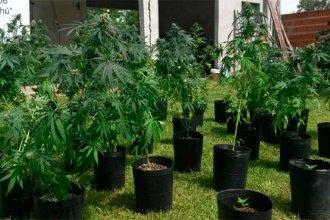Fueron alertados por ruidos en los techos, pero en la inspección descubrieron un invernadero de marihuana