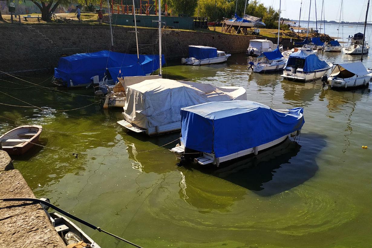 Algas en puerto de Colón (foto: Rubén Comán).