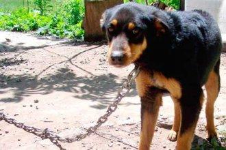 Vecinos denunciaron que una perra murió porque la dejaron atada en el sol y sin agua