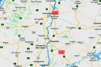 Del norte al sur de la costa del río Uruguay: nuevo caso de leishmaniasis puso en alerta a otra intendencia