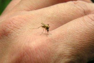 Confirmaron caso de dengue autóctono en Concordia: son ocho en Entre Ríos