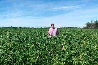 Productor entrerriano usa tecnología para aplicar herbicidas sólo a las malezas sin afectar al resto de la vegetación