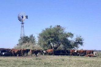 Robaron 32 cabezas de ganado: 20 desaparecieron y 12 fueron halladas en un campo vecino