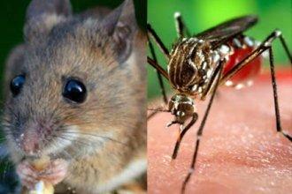 ¿Leptospirosis o Dengue? hospital analiza un nuevo caso en la costa del Uruguay