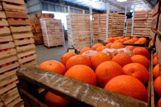 Europa suspendió la compra de naranjas argentinas, por una supuesta enfermedad en la mercadería