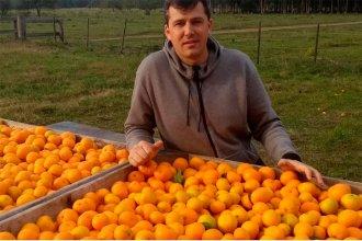 """Citricultura en tiempos de cuarentena: """"No podemos parar; si no sacás la fruta ahora, se cae"""""""