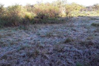 La primera helada del año tiñó de blanco los campos entrerrianos al amanecer