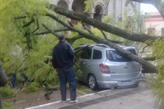 Luego de una jornada lluviosa, un árbol cayó sobre un vehículo con ocupantes