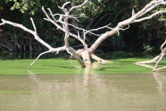 En una zona del río Uruguay, volvió la floración de algas y los especialistas lanzaron una advertencia