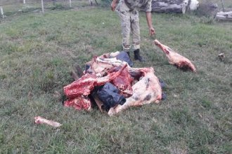 Secuestraron 300 kilos de carne a un comerciante que reaccionó con furia: golpeó al comisario