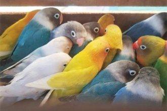 Rescataron 130 animales enjaluados en un camión, que iba por Autovía Artigas rumbo a provincia de Buenos Aires