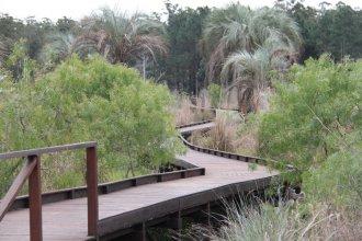 Sustituirán el eucaliptus por especies nativas, en un proyecto de reforestación de 70 hectáreas