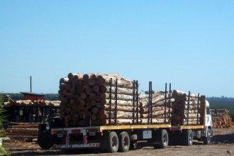 Reportan cómo está el sector forestal entrerriano, afectado por la parálisis que impuso la pandemia