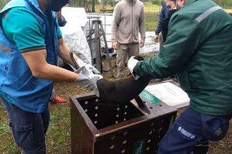 Regresarán al mar al lobo marino rescatado en Gualeguaychú