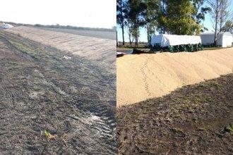 Denunciaron la destrucción de seis silobolsas de soja y maíz en el norte entrerriano