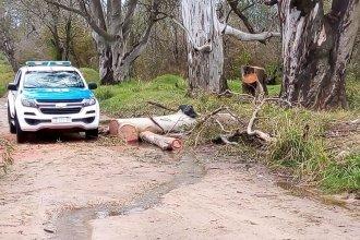 Gracias a las denuncias de los vecinos, detuvieron a personas que talaban árboles históricos