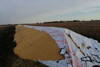Otro productor entrerriano sufrió la destrucción de tres silobolsas: le dejaron un mensaje