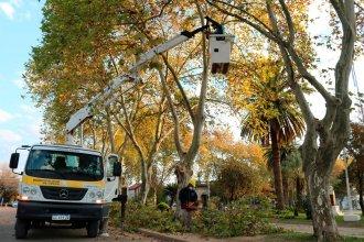 ¿A quién se le ocurre hoy pensar en plantar árboles?