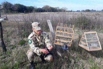 Gualeguaychú: rescataron más de 35 aves que estaban en cautiverio y listas para ser vendidas