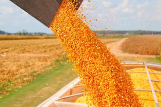 Cuánto maíz deberá cosechar un productor en Entre Ríos para no quedar en rojo