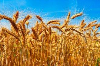 Bajo el impulso de la producción primaria y agroindustrial, crecieron las exportaciones entrerrianas en el 1° cuatrimestre