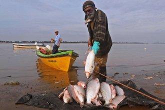 A través de una resolución, reducen un 50% el cupo de extracción y acopio de peces en Entre Ríos