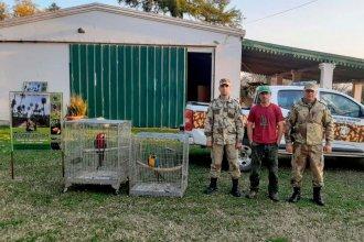 """La batalla judicial por los guacamayos continúa: revés para la """"dueña"""""""