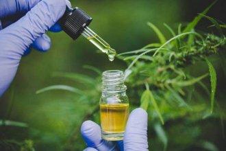 """Proyecto de ley de cultivo de cannabis para uso medicinal: """"El Estado debe tener un rol central"""", afirmó Bahillo"""