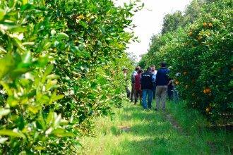 La temporada del citrus cerró con importantes bajas en la provincia: 20% en naranjas y 30% en mandarinas