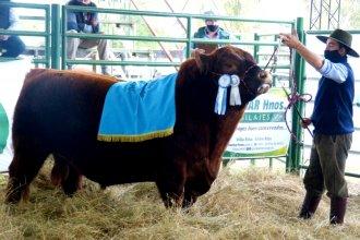 Récord histórico: ¿Cuánto pagaron por el 50% de este toro Angus entrerriano?