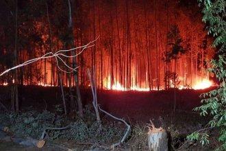 Tras un breve respiro para los bomberos, se reactivó incendio forestal en la costa del Uruguay