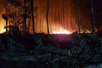Incendio forestal: ¿Qué otras pérdidas materiales ocasionó?